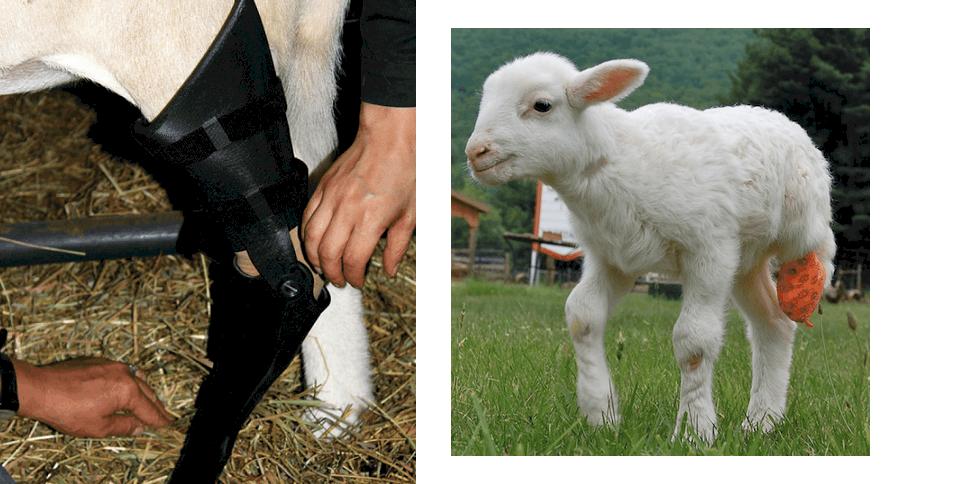 อุปกรณ์ทางการแพทย์ และอวัยวะเทียมของสัตว์ Prosthetics 3D Printing