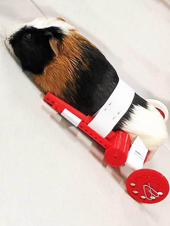 3D Printer WHEELCHAIR Guinea Pig