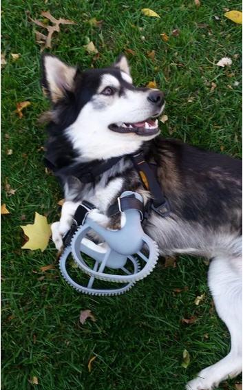 3D printing prosthetics dog