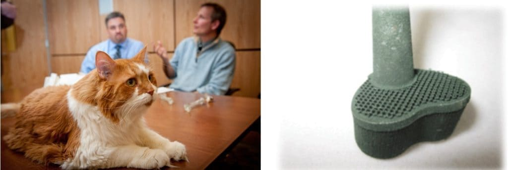 3D-printed-knee-implant-for-cat