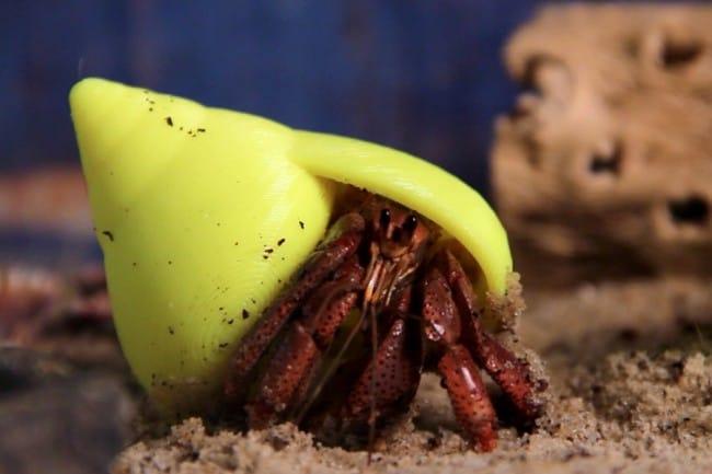 crab 3D printing shells