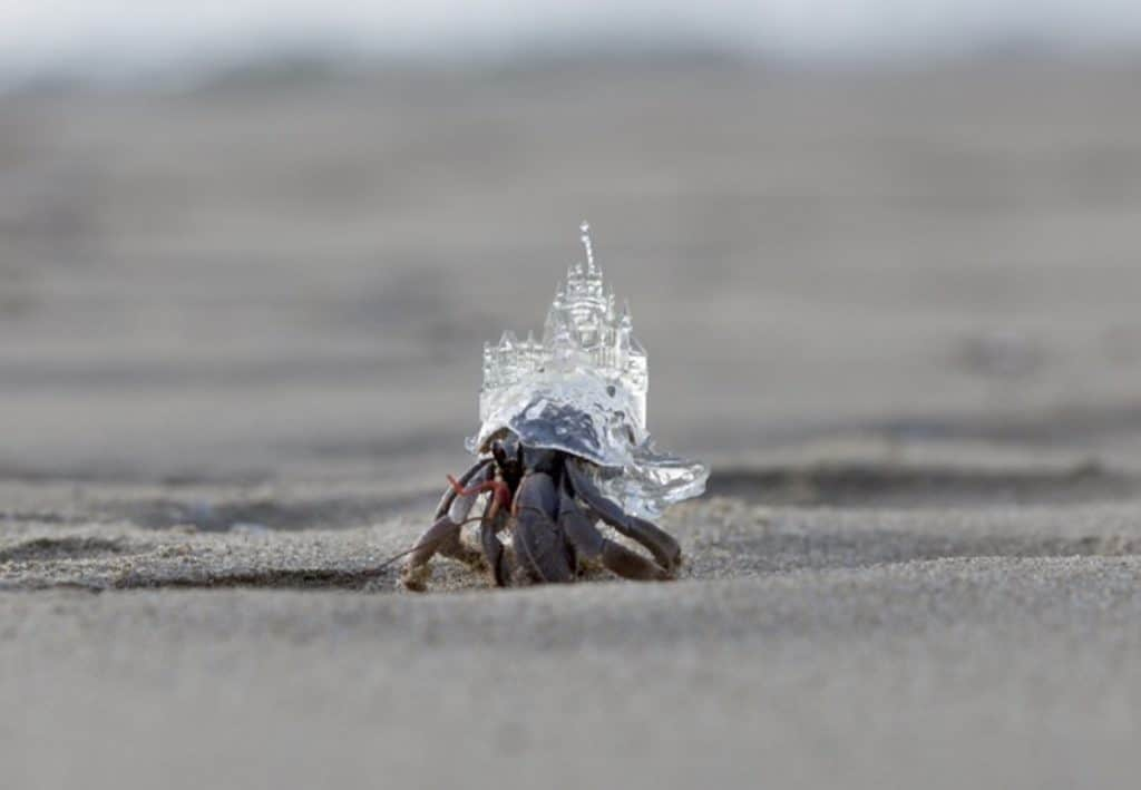 hermit-crab-3d-printed-shell